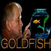 goldfish-7766