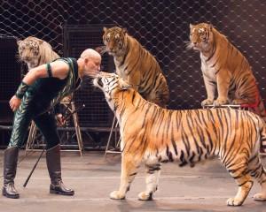 Taba Tigers